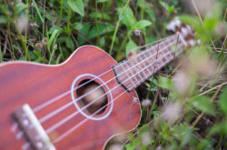 Best Ukulele: Beginner's Guide